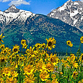 Tetons Peaks And Flowers Left Panel by Greg Norrell