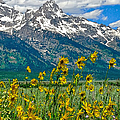 Tetons Peaks And Flowers Right Panel by Greg Norrell