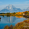 Tetons With Moose by Anthony Mercieca