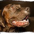 Tex The Dog by Harold Bonacquist