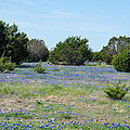 Georgetown Texas Bluebonnet Spring by JG Thompson