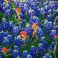 Texas Colors by Inge Johnsson