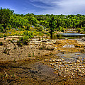 Texas Hill Country Stream by David and Carol Kelly