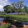Texas Hill Country - Fs000056 by Daniel Dempster