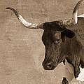 Texas Longhorn #6 by Betty LaRue