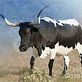Texas Longhorn #7 by Betty LaRue