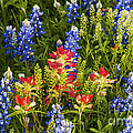 Texas Spring by Bob Phillips