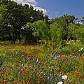 Texas Spring Spectacular by Lynn Bauer