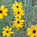 Texas Wild Flower by Angie Andress