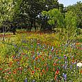 Texas Wildflower Medley by Lynn Bauer