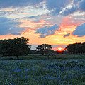 Texas Wildflower Sunset  by Lynn Bauer