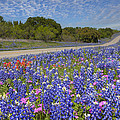 Texas Wildflowers Images - Bluebonnets 2 by Rob Greebon