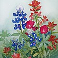 Texas Wildflowers by Sue Kemp
