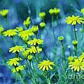 Texas Wildflowers V4 by Douglas Barnard
