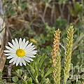 Texas Wildflowers V5 by Douglas Barnard