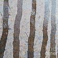 Textural Forest by Brian Boyle