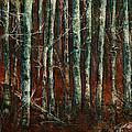 Textured Birch Forest by Jani Freimann