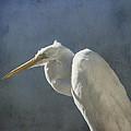 Textured Great Egret by Steve Gravano