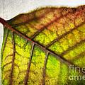 Textured Leaf Abstract by Scott Pellegrin
