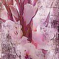 Textured Pink Gladiolas by Sandra Foster