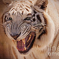 Textured Tiger by Janice Pariza