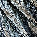 Textured Tree Bark by Debbie Oppermann