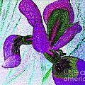 Textured Wild Purple Iris by Barbara Griffin