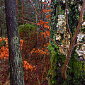 Textures Of Fall by Richard Stephen