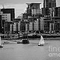 Thames Sailing by Matt Malloy