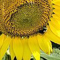 Thank God For Sunflowers by Paul Mashburn