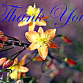 Thank You Card by Bob Johnson
