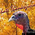 Thanksgiving Fun by Fabian Roessler