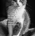 Thanksgiving Kitty Bw by Joan Wallner