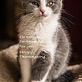 Thanksgiving Kitty by Joan Wallner