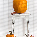 Thanksgiving Pumpkin Display by Amanda Elwell