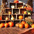 Thanksgiving Pumpkin Display No. 2 by Greg Hager