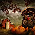 Thanksgiving Turkey Among Pumkins by Randall Nyhof