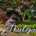 Thanksgiving Turkey by Jeff Folger