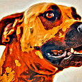 That Doggone Face by Alice Gipson