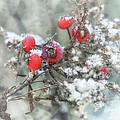 That First Snowfall by Susan Capuano