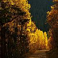 The Golden Road by Jeremy Rhoades