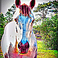 That Horses Face by Alice Gipson