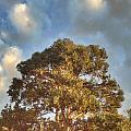That Peaceful Tree Again by Caseofinstagram