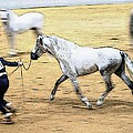 That Trot Off by Alice Gipson