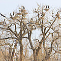 Thats A Lot Of Heron by James BO Insogna