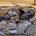 That's What Remains Of A Car by Christine Czernin Morzin