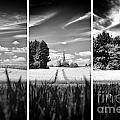 Thaxted Mill Triptych by Jack Torcello