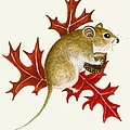The Acorn Mouse by Lori Ziemba