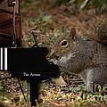 The Acorn's Pianist by Sandra Clark