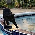 The Adventurous Feline by Peggy Hughes